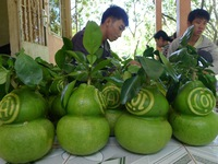 Trái cây tạo hình giảm 70