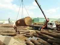 Vietnam enjoys trade surplus of wood products