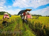Mekong Delta province provides housing land for poor households