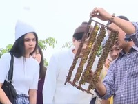 Du lịch giữa bầy ong khiến du khách thích thú