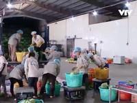 Doanh nghiệp Việt xuất khẩu rau trực tiếp sang Nhật Bản