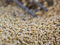 Trung Quốc có thể miễn thuế cho 10 triệu tấn đậu tương từ Mỹ