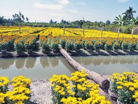Sa Dec flower village gets ready for new year