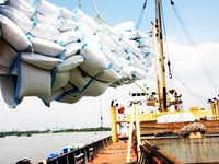 Export price of rice suffers dramatic decrease
