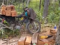 Gia Lai: Ban quán lý phòng hộ Chư Mố để mất 1.500 héc ta rừng