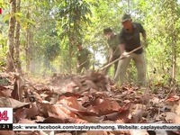Dong Nai acts to prevent forest fires