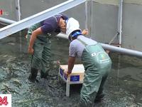 Vụ xử lý ô nhiễm sông Tô Lịch: JEBO gửi lời xin lỗi Chủ tịch UBND thành phố Hà Nội