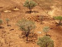 Kinh tế trang trại của Australia bị thiệt hại nặng do biến đổi khí hậu
