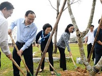 Over 100 thousand trees given to Binh Dinh