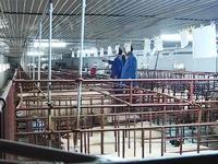 Đảm bảo an toàn dịch bệnh trong chăn nuôi