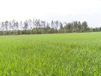 Người trồng lúa sẽ được dùng phân bón chất lượng với giá thấp