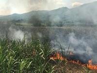 Quảng Ngãi: Hàng trăm người tham gia chữa cháy mía của 18 hộ dân