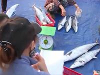 Hà Tĩnh đẩy mạnh xuất khẩu thủy sản