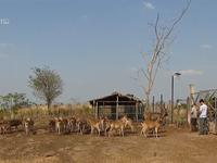 Khám phá thế giới động vật hoang dã trong vườn thú Mayura, Campuchia