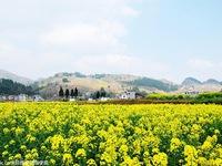 Rực rỡ hoa Xuân khoe sắc ở Trung Quốc