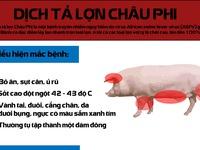 [INFOGRAPHIC]Những điều cần biết về dịch tả lợn châu Phi