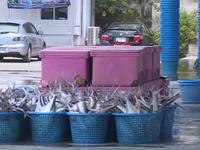 Thoát thẻ vàng thủy sản EU - Kinh nghiệm của Thái Lan