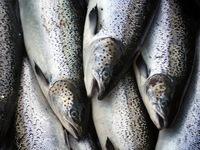 WTO ra phán quyết ủng hộ Hàn Quốc cấm nhập hải sản Nhật Bản