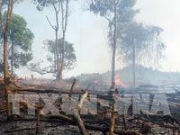 Nắng nóng kéo dài gây nguy cơ cháy rừng cao