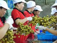Quý I/2019, xuất khẩu nông, lâm, thủy sản của Việt Nam giảm gần 3#phantram