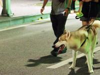 Chó thả rông, không rọ mõm nơi công cộng: Gây nguy hiểm cho cộng đồng