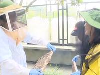 Mùa hoa nhãn nở rộ, người nuôi ong bận rộn thu mật