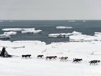Báo động băng tan ở biển Bering