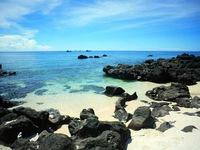 'Thiên đường san hô' ở Đảo Bé, Lý Sơn