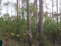 Điều tra vụ đầu độc rừng thông tại Lâm Đồng