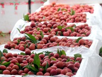 Frozen lychees potential for exports