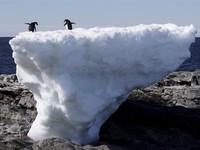 Băng tan nhanh kỷ lục, 2019 có thể là năm tai họa tại Bắc Cực