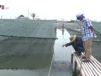 Quảng Nam khuyến khích nuôi tôm sạch bằng công nghệ cao