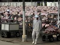 Brazil tạm ngừng xuất khẩu thịt bò sang Trung Quốc do phát hiện trường hợp bò điên