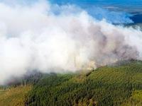 Nắng nóng gây cháy rừng tại Đức