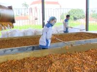 Lần đầu tiên Việt Nam xuất khẩu bột nghệ sang Nhật Bản