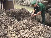 Quảng Ninh bắt giữ 30.000 dây hàu giống nhập lậu