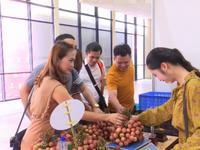 Khai mạc Tuần lễ vải thiều Lục Ngạn 2019