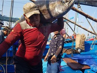 Tuna vessels returned with high output