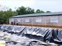 Ô nhiễm từ trại nuôi lợn ở Ba Vì, Hà Nội: Khắc phục xong chỗ này vẫn còn chỗ khác