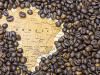 Xuất khẩu cà phê Brazil tăng mạnh trong tháng 7/2019
