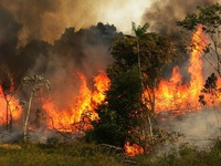 Cháy rừng Amazon ở mức kỷ lục