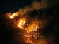 Paraguay và Bolivia dồn lực chữa cháy rừng Amazon