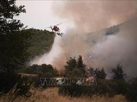 Sơ tán hàng trăm du khách do cháy rừng tại Hy Lạp