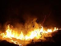 Cháy rừng Amazon -  'Tấm khiên sống' bảo vệ Trái đất đang lâm nguy