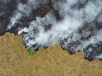 Brazil chấp nhận hỗ trợ tài chính nước ngoài cứu rừng Amazon