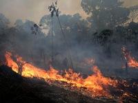 Rừng châu Phi cháy gấp 3 lần Amazon
