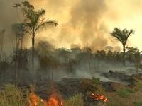 WHO cảnh báo tác động của cháy rừng Amazon đối với sức khỏe trẻ em