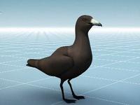 Chim biển bé đi do ăn rác thải nhựa
