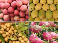 Fruit and vegetable exports drop 5.8 per cent in eight-month period