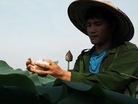 Cử nhân báo chí về quê khởi nghiệp trồng chè, ướp sen